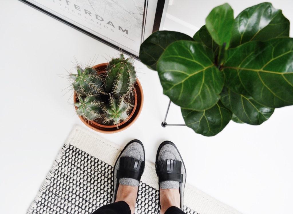cactus interieur